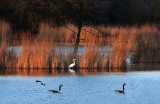 Vogelschutzgebiet Garstädter Teiche