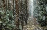 Schneetreiben in Norddeutschland